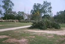 Cactus Park 4