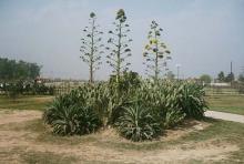 Cactus Park 3