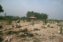 Cactus Park  1