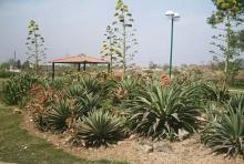 Cactus Park 2