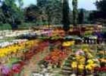 उद्यान चित्र 8