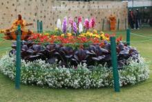 Rose Festival 11